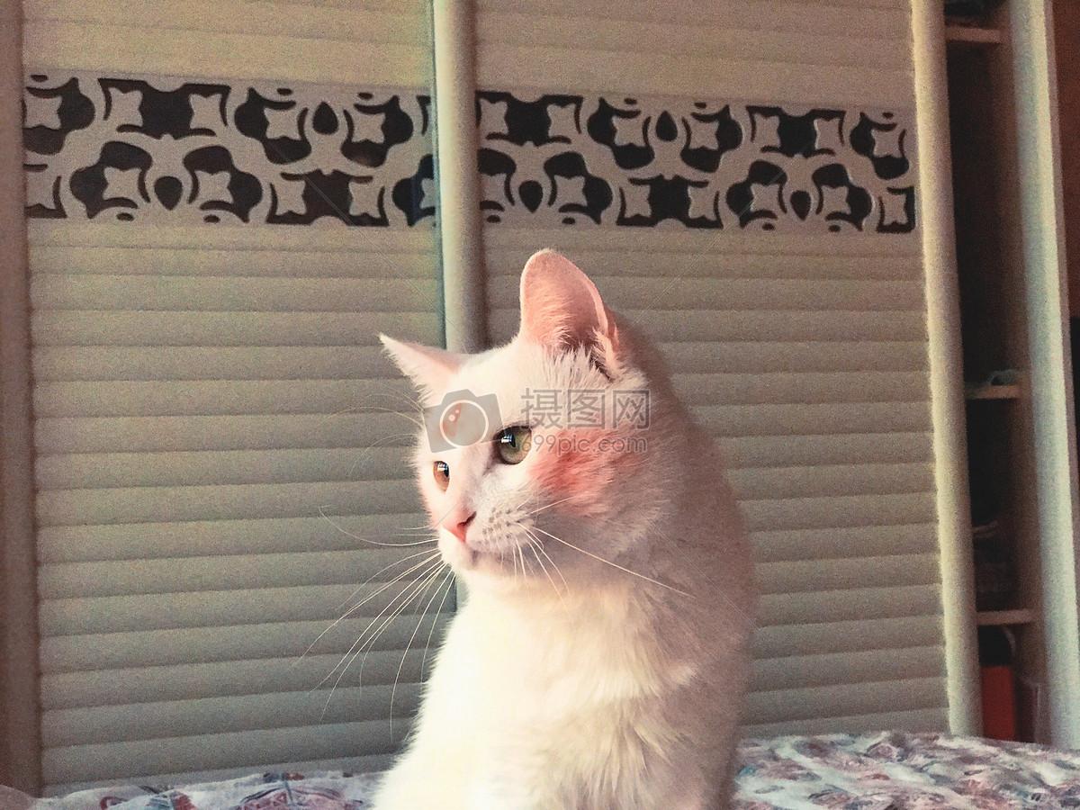 标签: 白色睡觉猫咪特写抓拍可爱猫咪生活照特写图片猫咪生活照特写