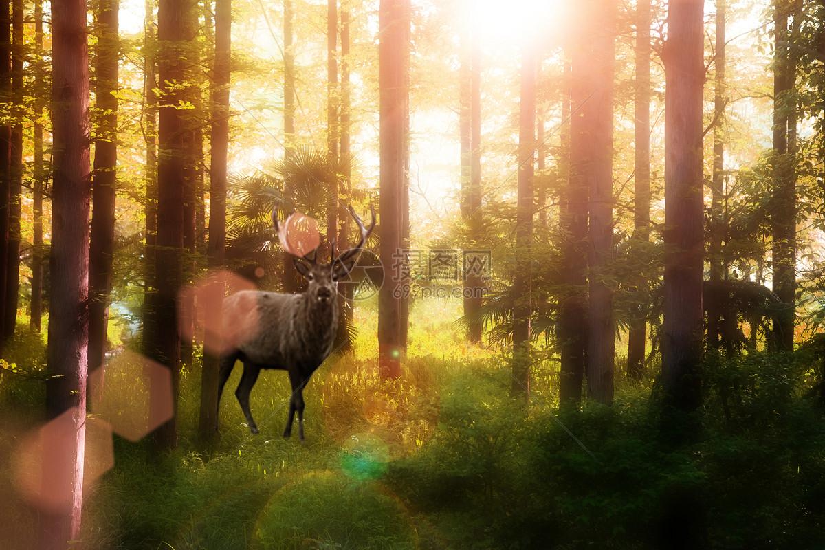 森林中的鹿图片素材_免费下载_jpg图片格式_vrf高清