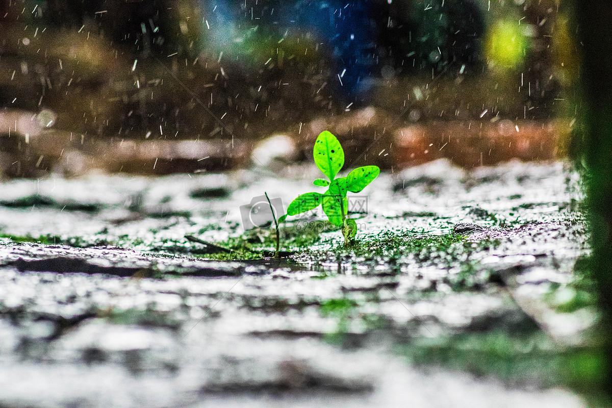 雨中小草摄影图片免费下载_自然/风景图库大全_编号