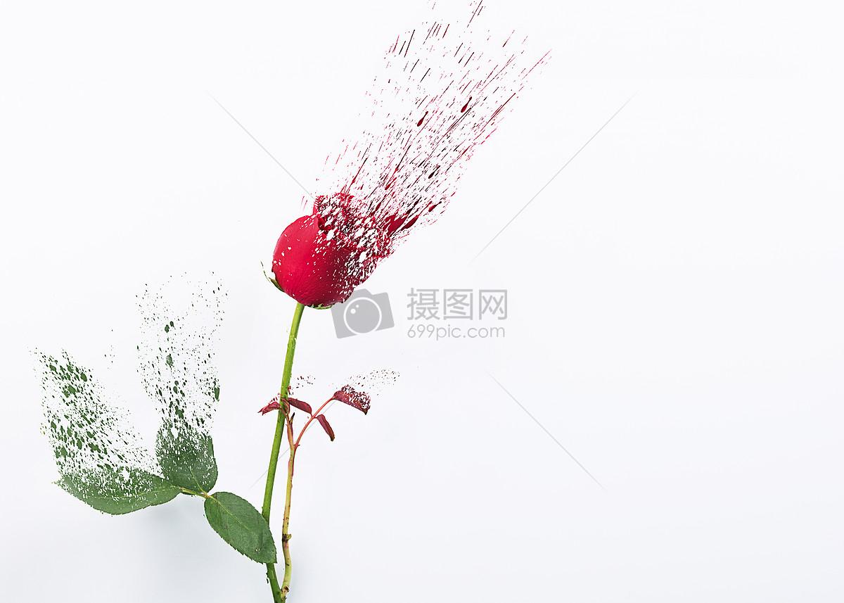 碎化的玫瑰花图片