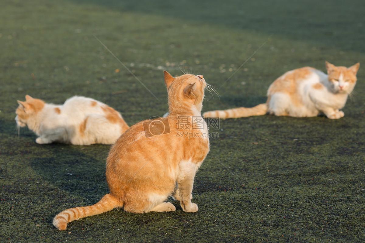 学校操场上的流浪猫摄影图片免费下载_动物图库大全