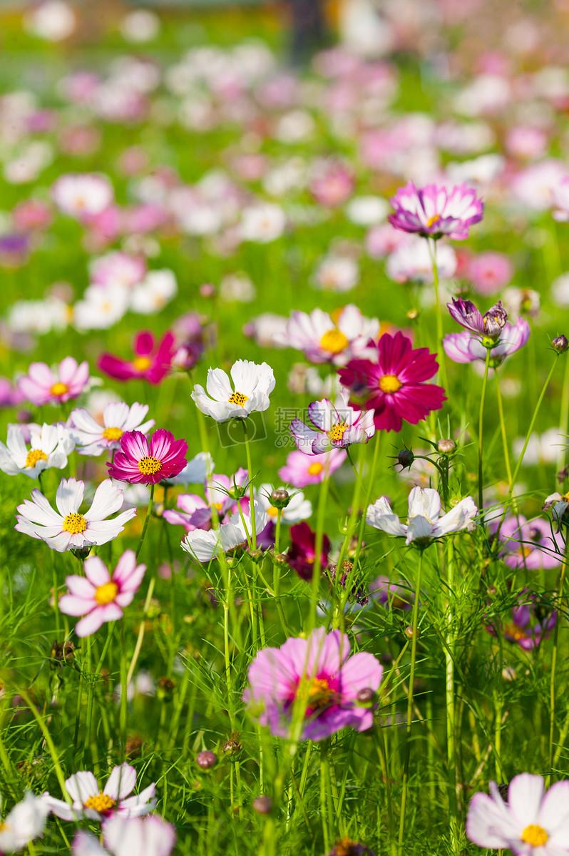花朵摄影图片免费下载_花草树木图库大全_编号-摄图片