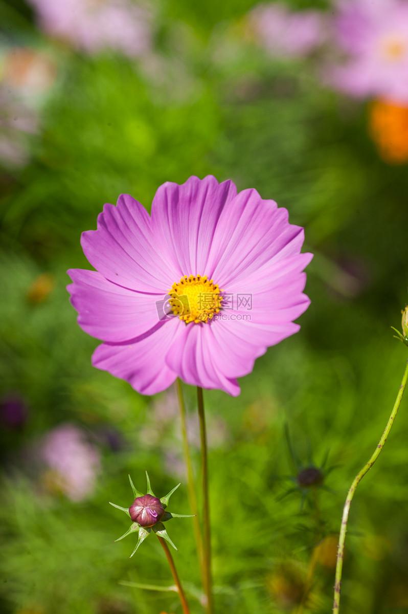 花朵图片素材_免费下载_jpg图片格式_vrf高清图片_摄