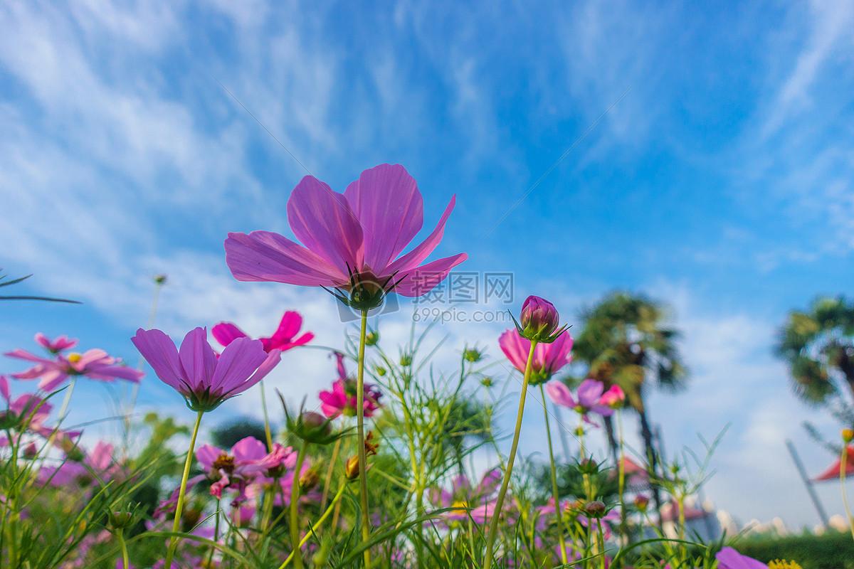 自然风景花朵天空