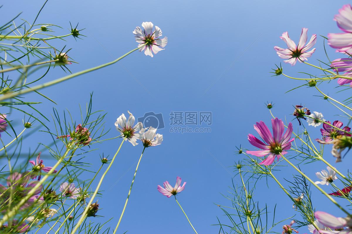 自然风景花朵天空背影素材