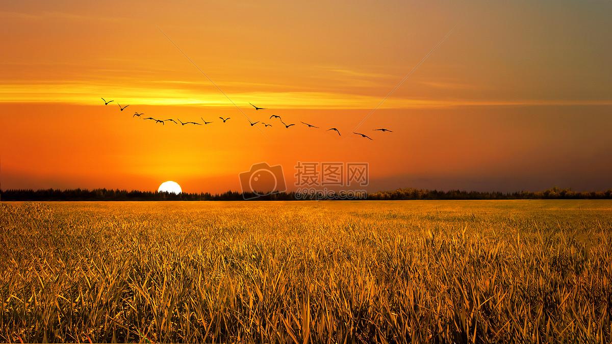 照片 自然风景 夕阳下的稻田jpg  分享: qq好友 微信朋友圈 qq空间