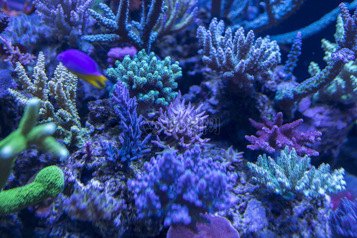 海底世界各种鱼和生物
