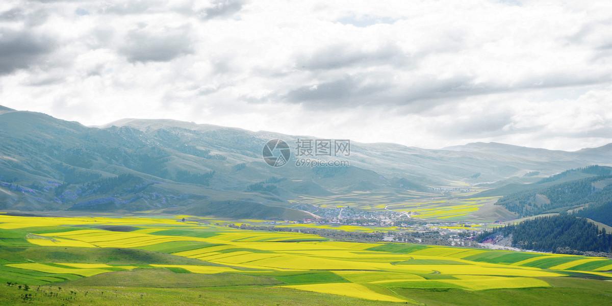 唯美图片 自然风景 青海油菜花田jpg
