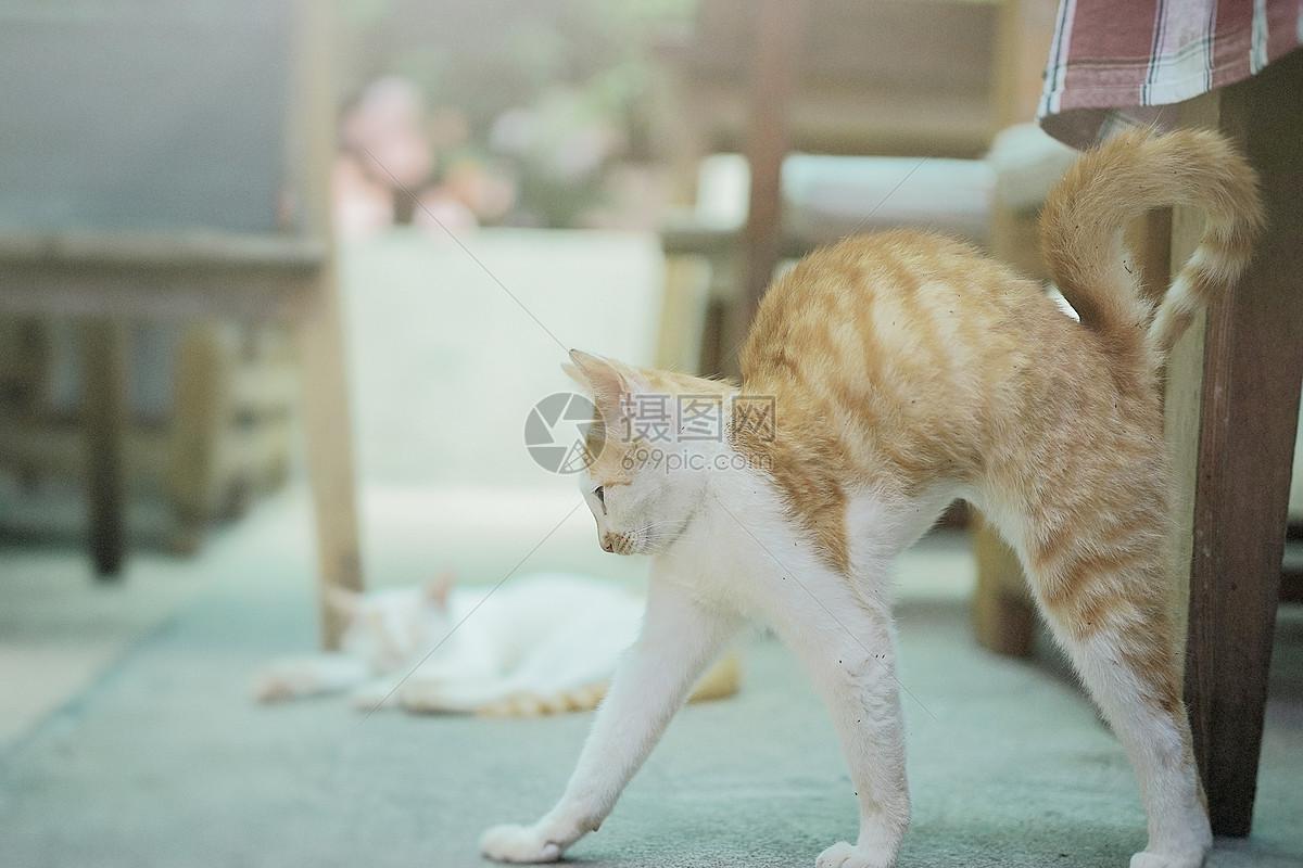 唯美图片 自然风景 伸懒腰的猫咪jpg