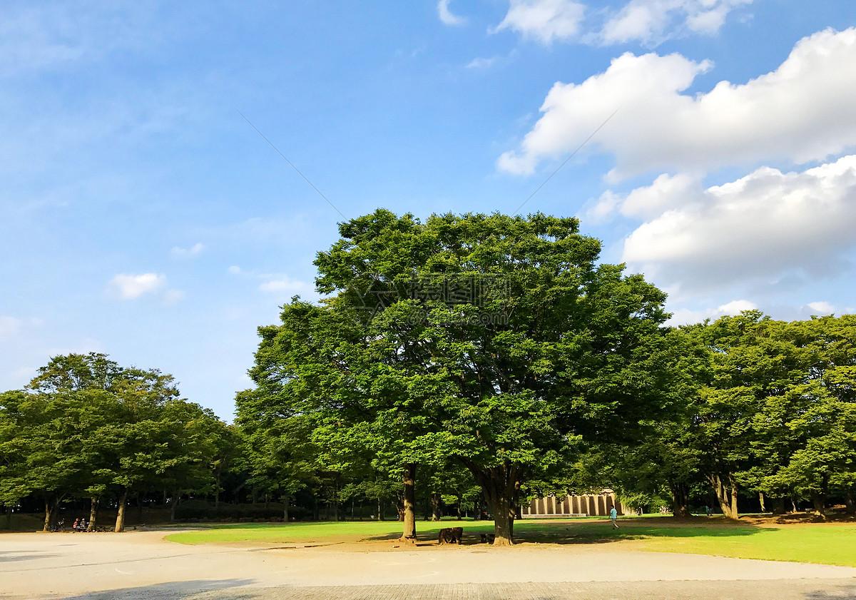 一棵大树摄影图片免费下载_自然风景图库大全_编号-摄