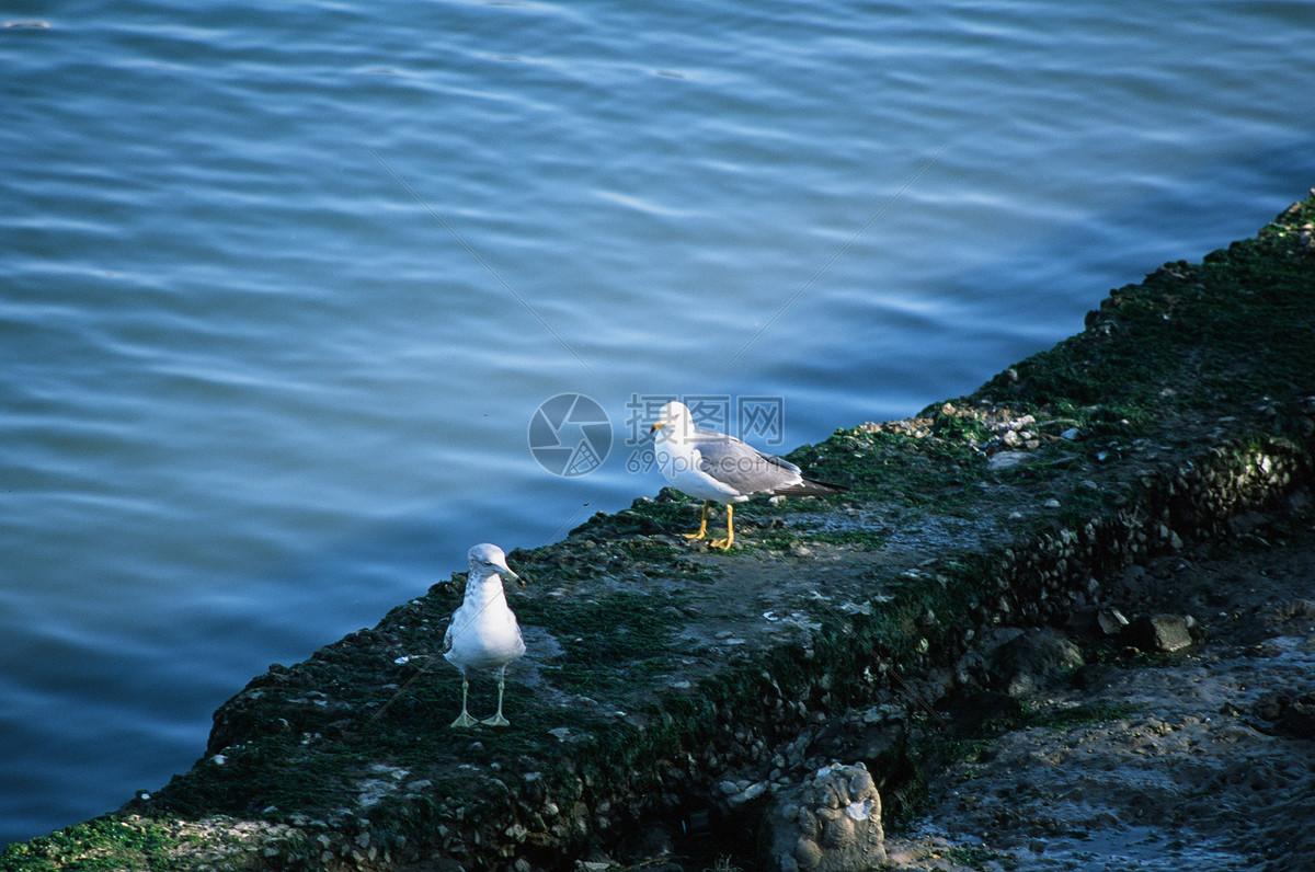 唯美图片 自然风景 海鸥jpg  分享: qq好友 微信朋友圈 qq空间 新浪