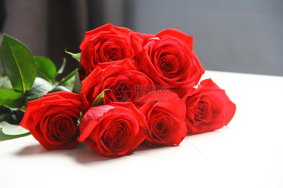 玫瑰花图片素材_免费下载_jpg图片格式_vrf高清图片