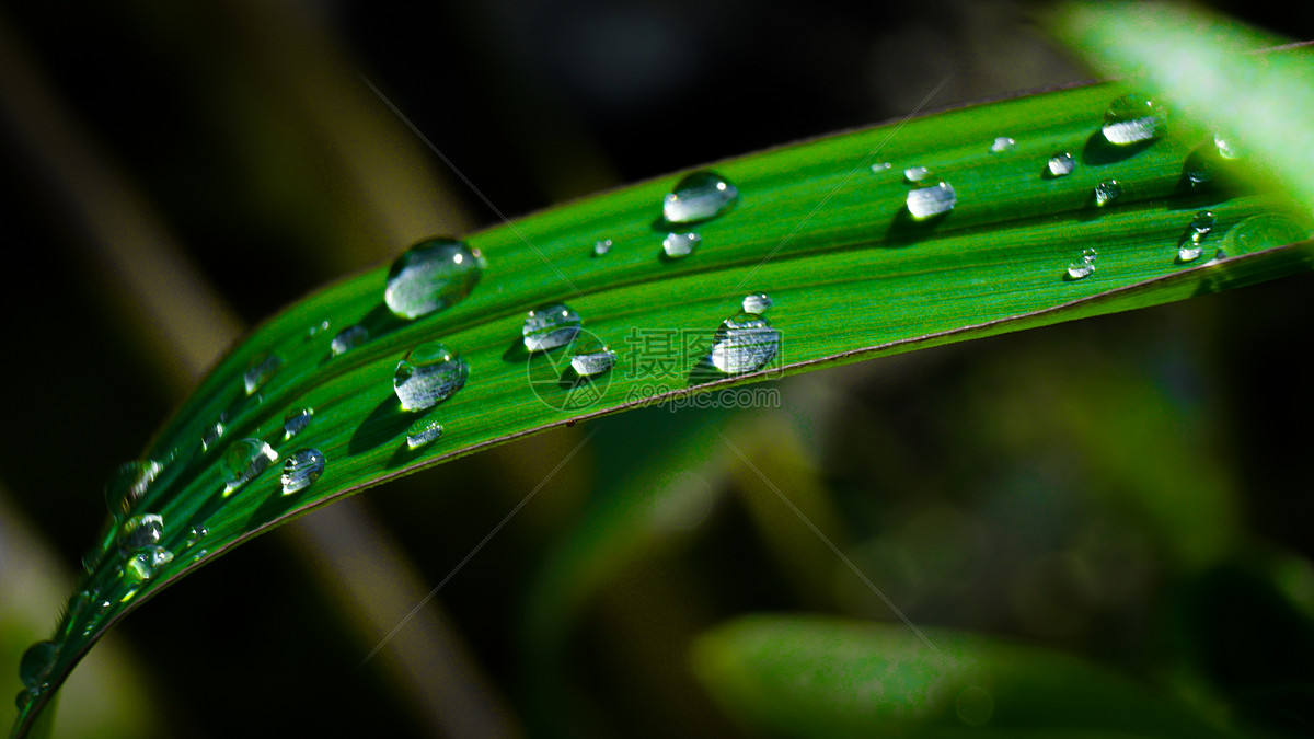 唯美图片 自然风景 绿叶上的露珠jpg