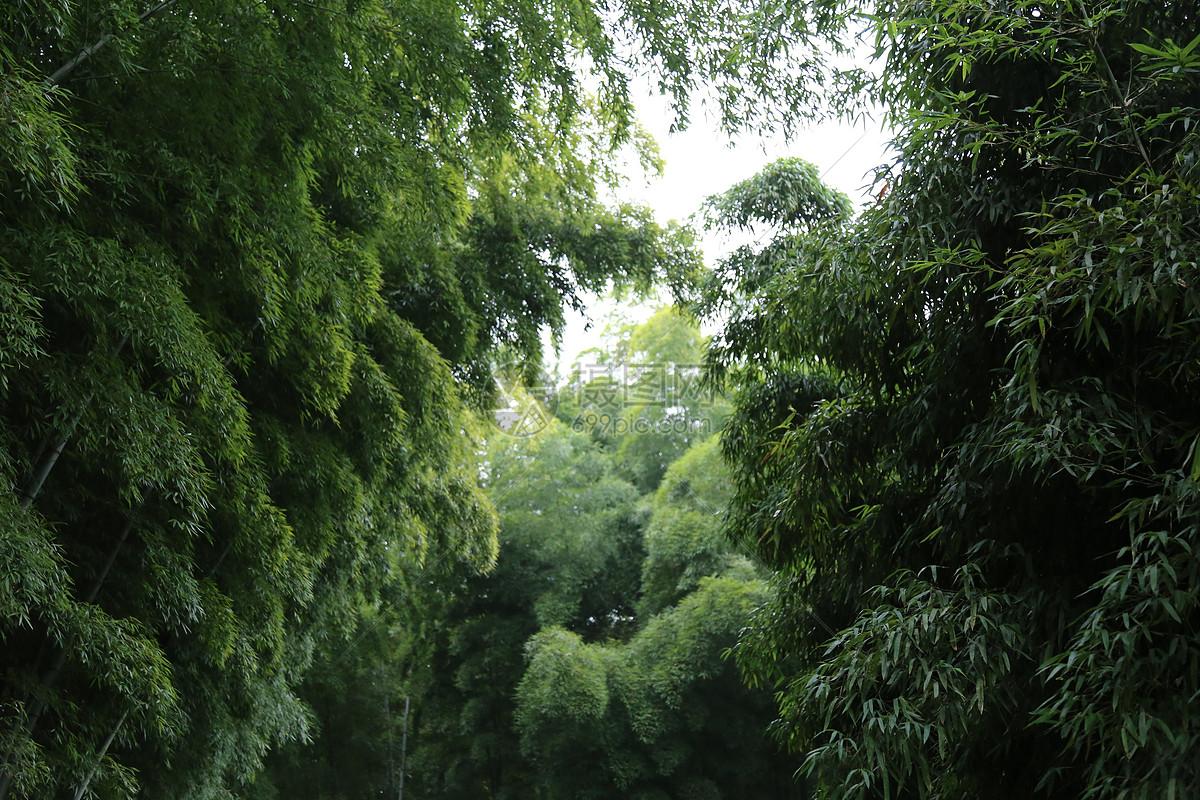 壁纸 风景 森林 植物 桌面 1200_800