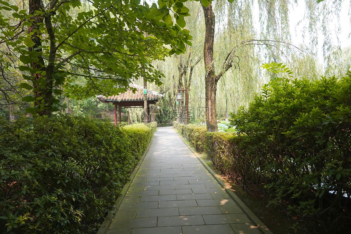 公园笔直小路风景