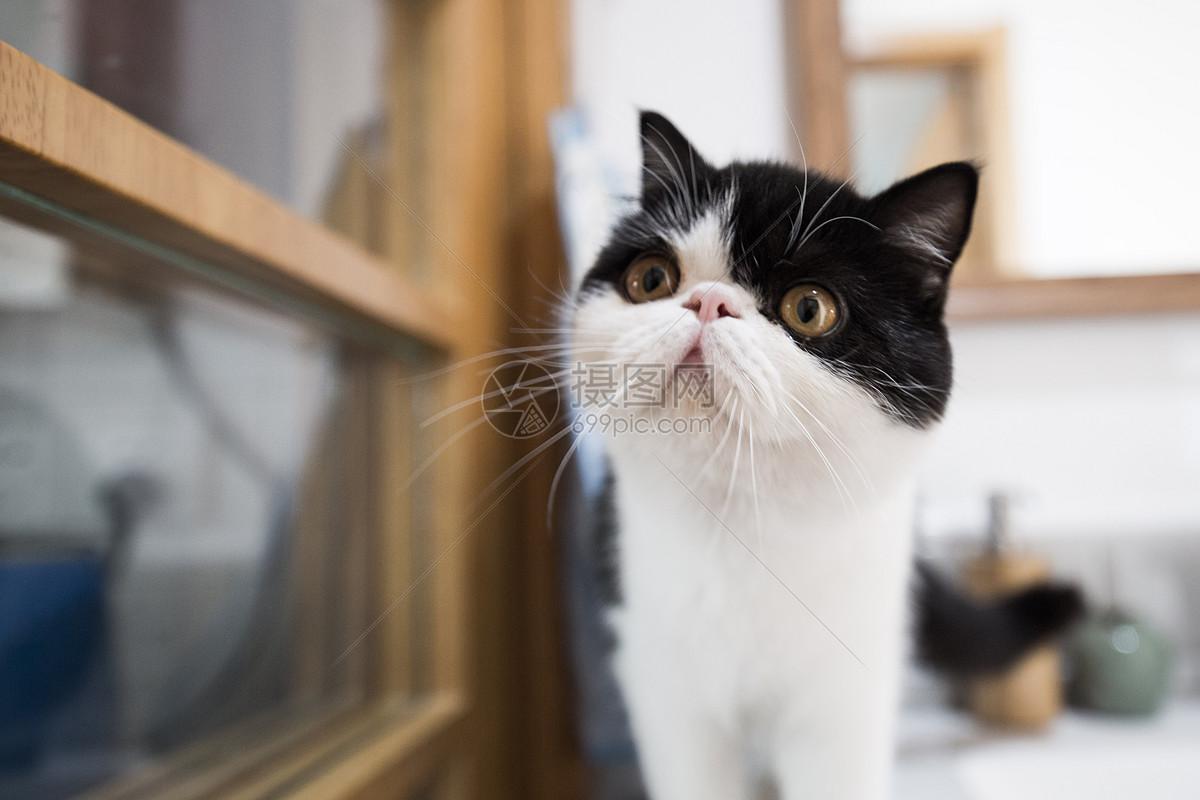 唯美手绘猫咪图片