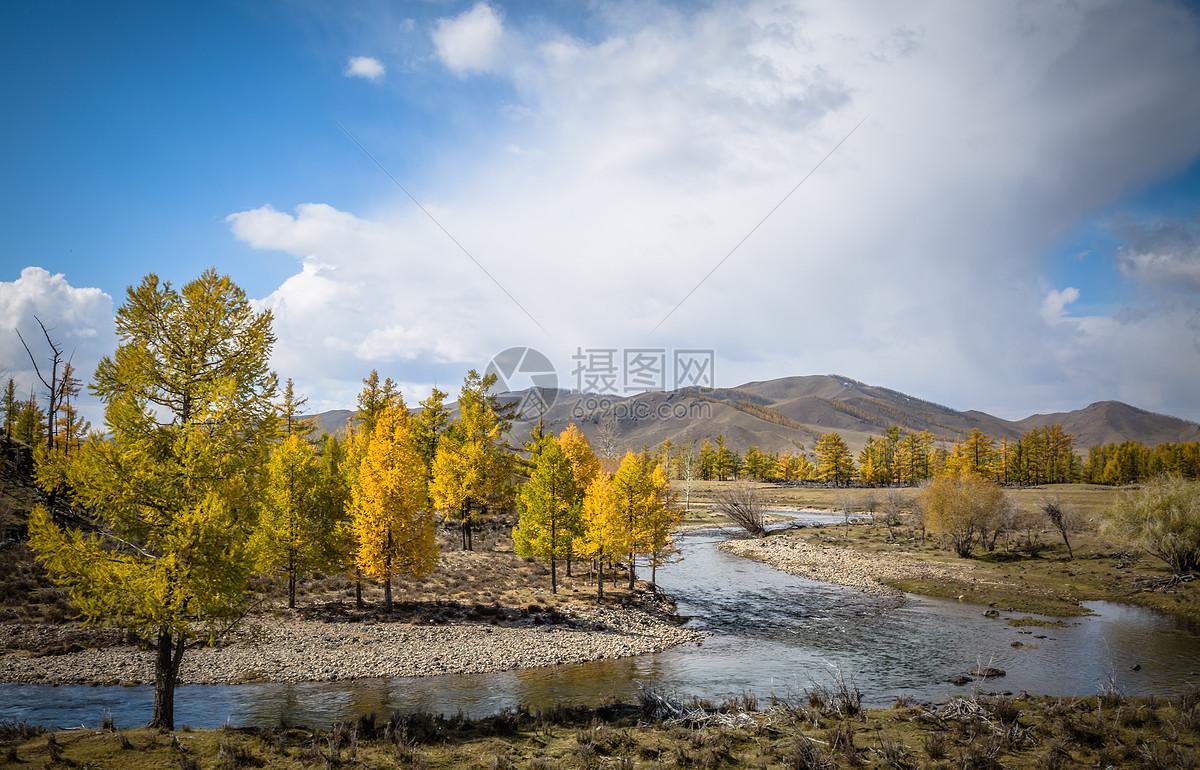 唯美图片 自然风景 秋天金黄色的树木 jpg