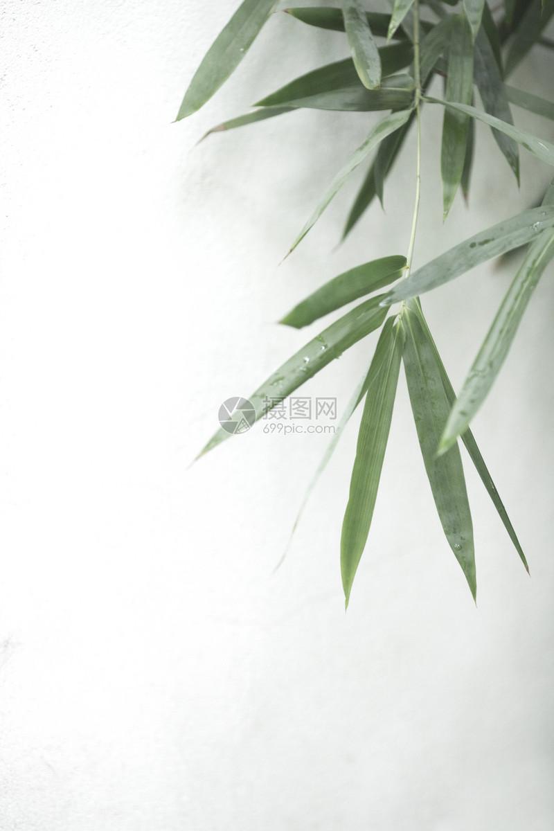 图片 照片 自然风景 中国风极简竹叶.jpg