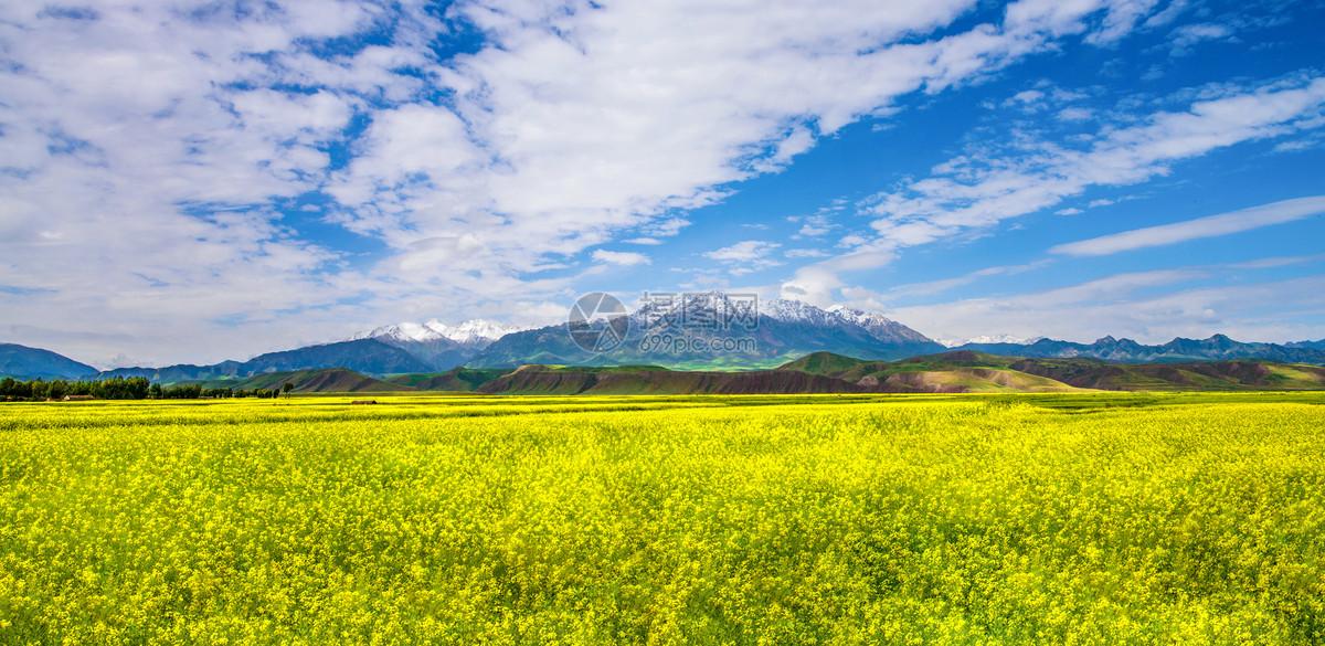 图片 照片 自然风景 雪山油菜花.jpg