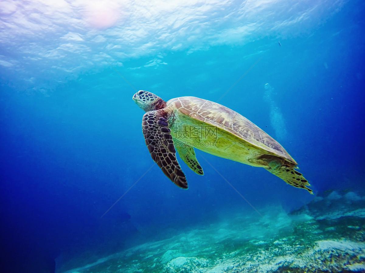 海洋世界海龟