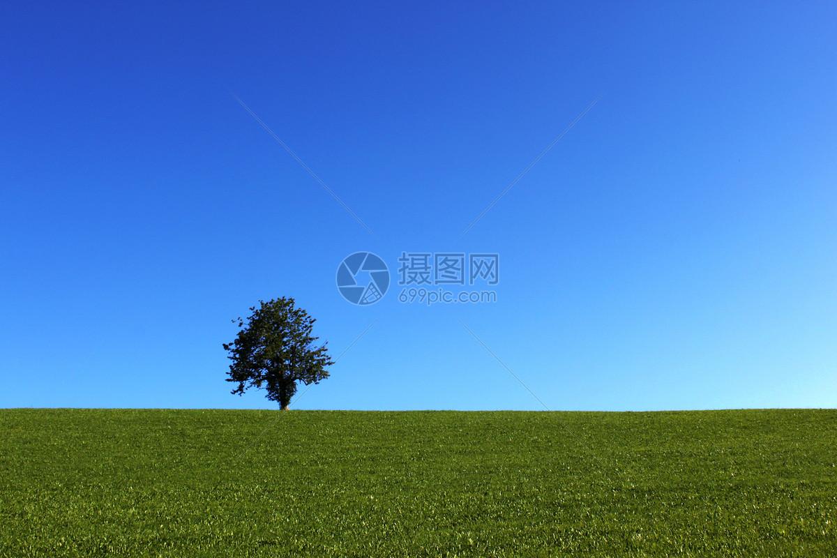 欧洲德国一棵树的风景