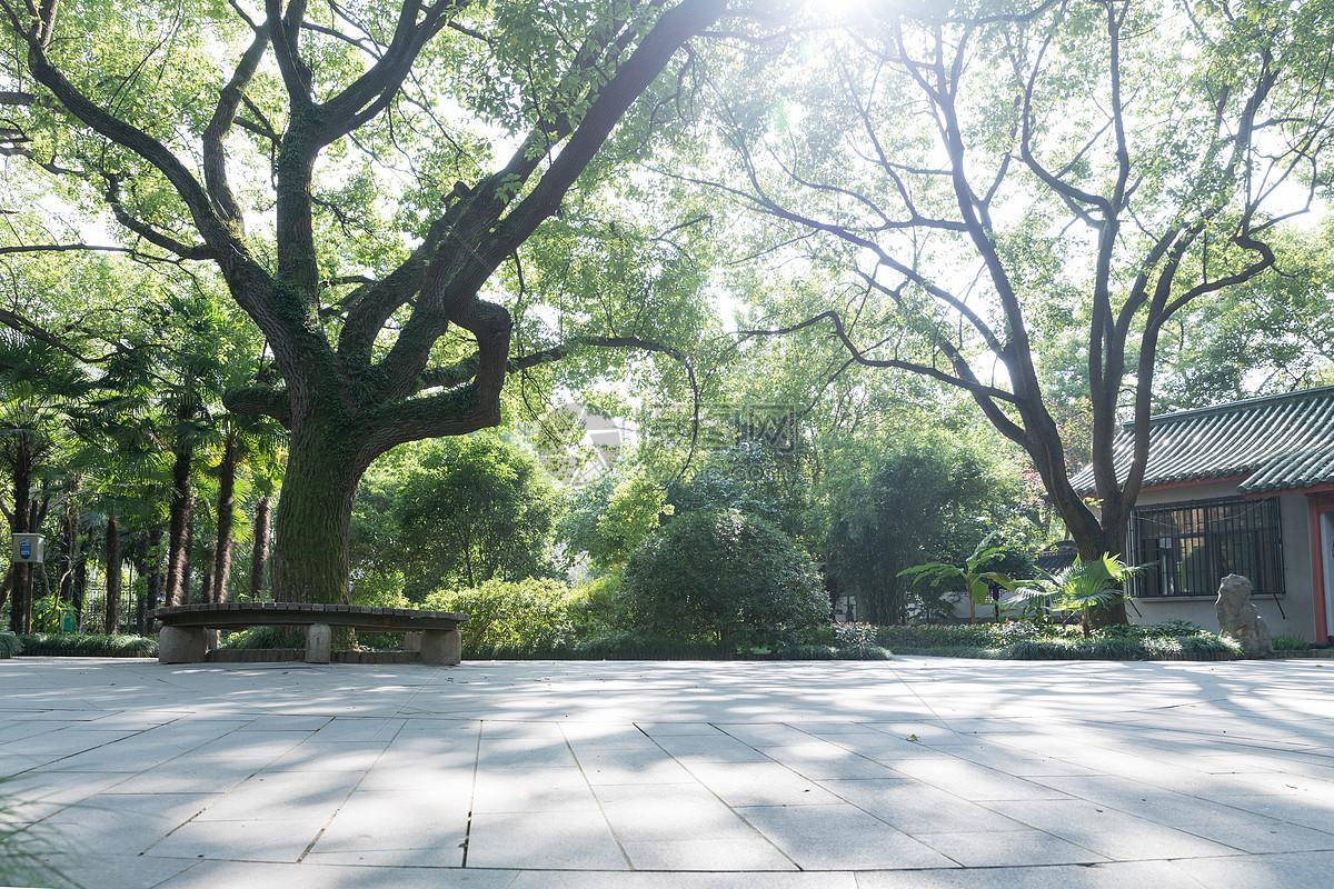 唯美图片 自然风景 森林公园大树背景留白jpg  分享: qq好友 微信朋友