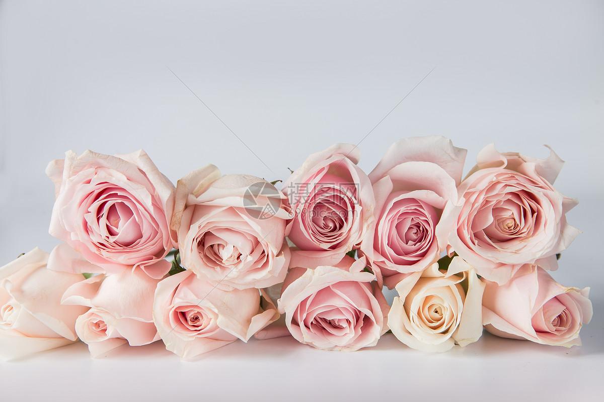 白底粉色玫瑰花