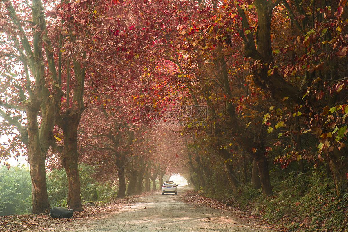唯美图片 自然风景 深秋红叶梧桐树jpg  分享: qq好友 微信朋友圈 qq