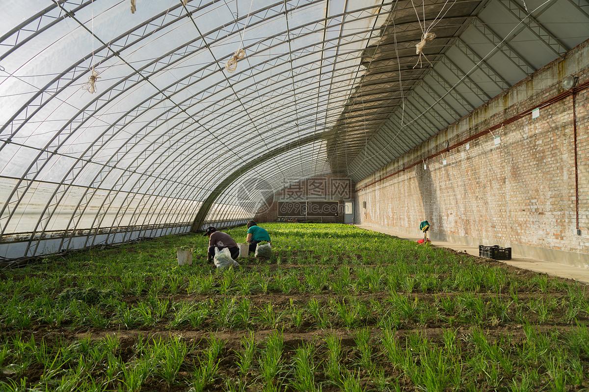 蔬菜采摘大棚