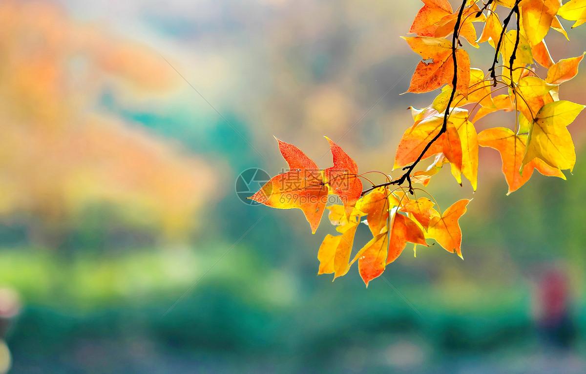 照片 自然风景 秋叶jpg  分享: qq好友 微信朋友圈