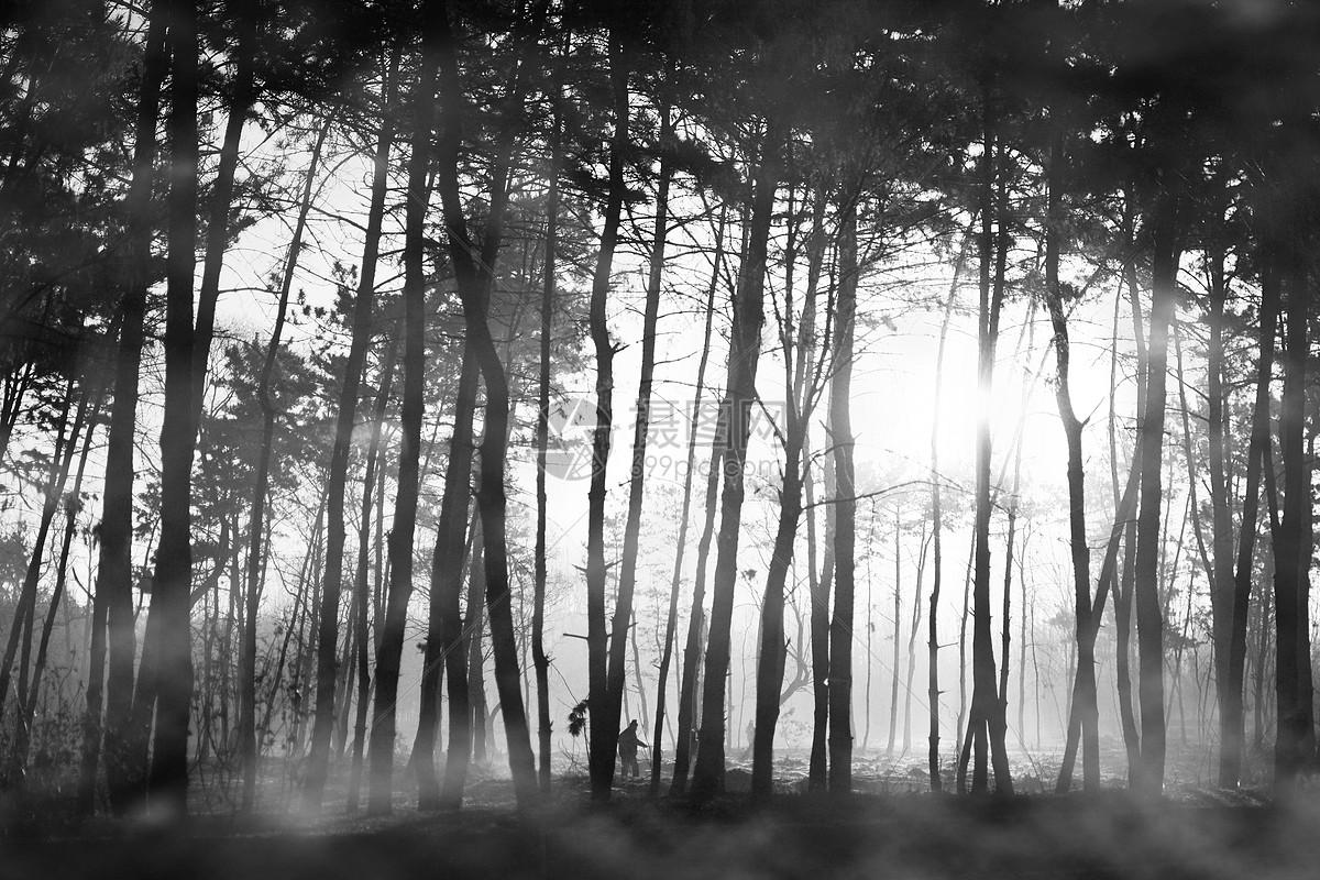 >>早晨图片树木图片森林图片烟雾图片自然美图片 版权申明:本网站所有