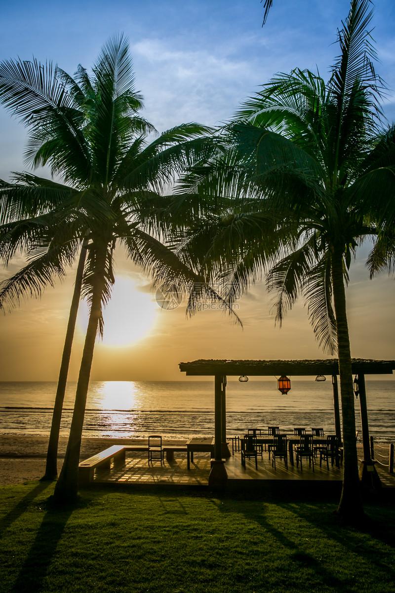 照片 自然风景 泰国海边椰树林jpg