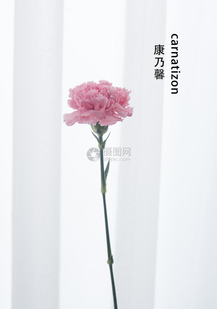 照片 自然风景 白色背景单枝鲜花花材jpg  分享: qq好友 微信朋友圈