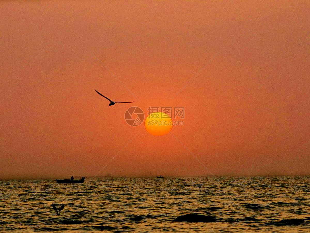 图片 照片 自然风景 日出海鸥太阳jpg