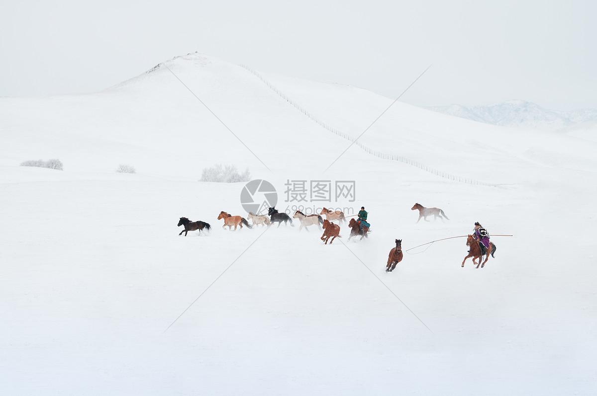 冬天雪地上的骏马图图片