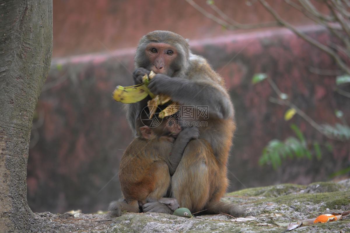 3d猴子雕塑实例