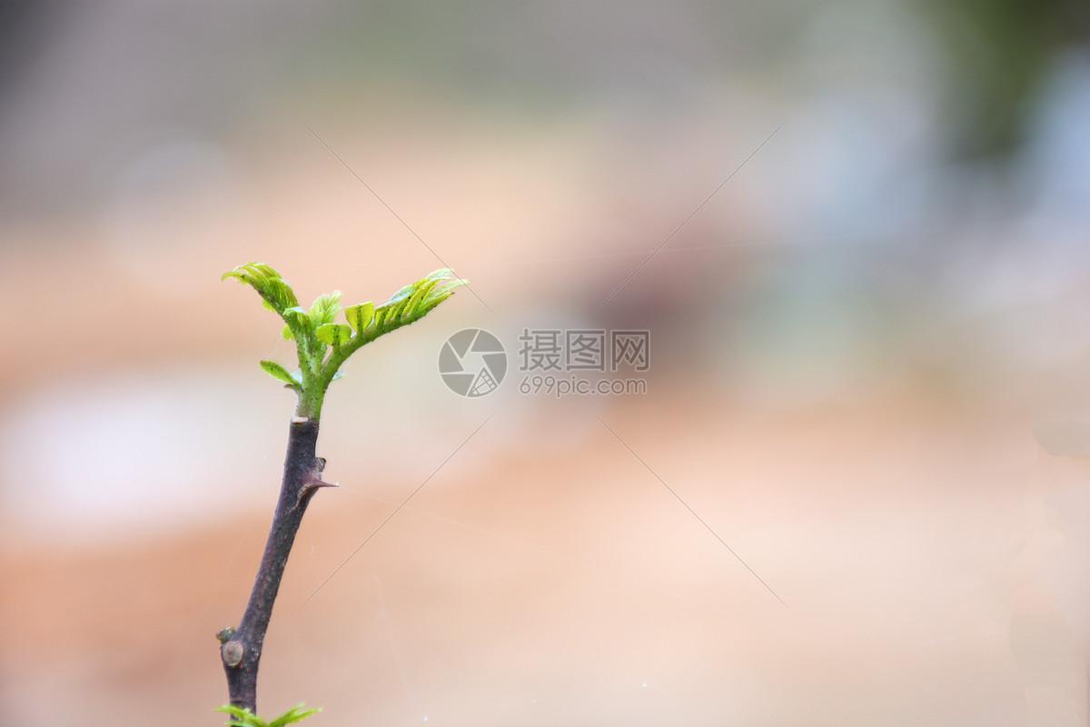 发芽的小树苗