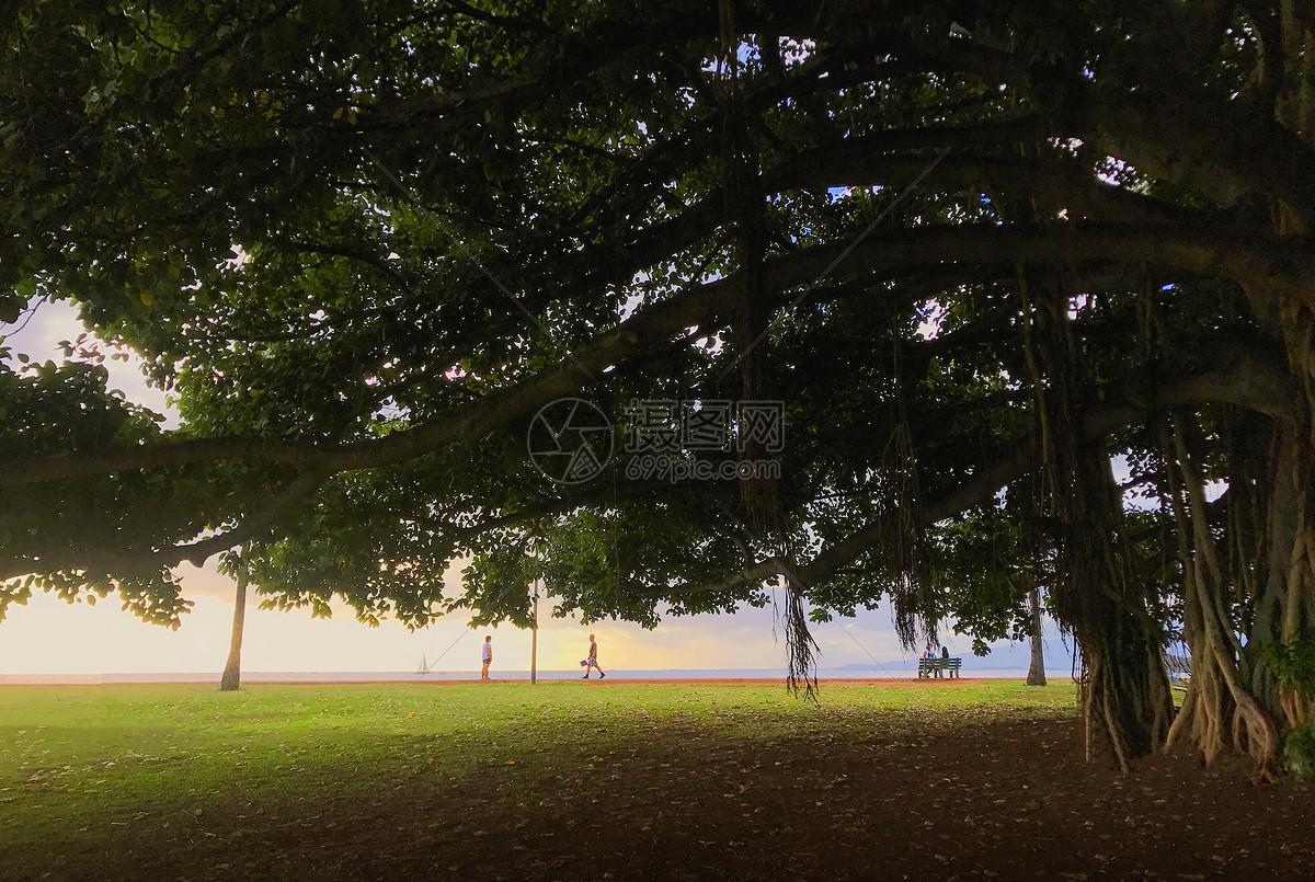 大树风景简单微信头像