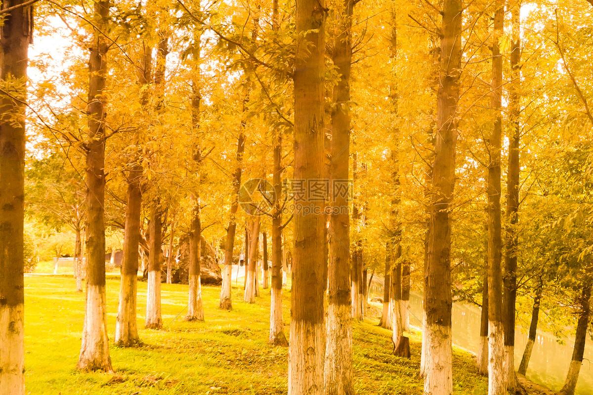 雍和宫银杏叶图片