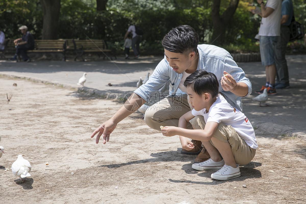 父子公园喂鸽子图片