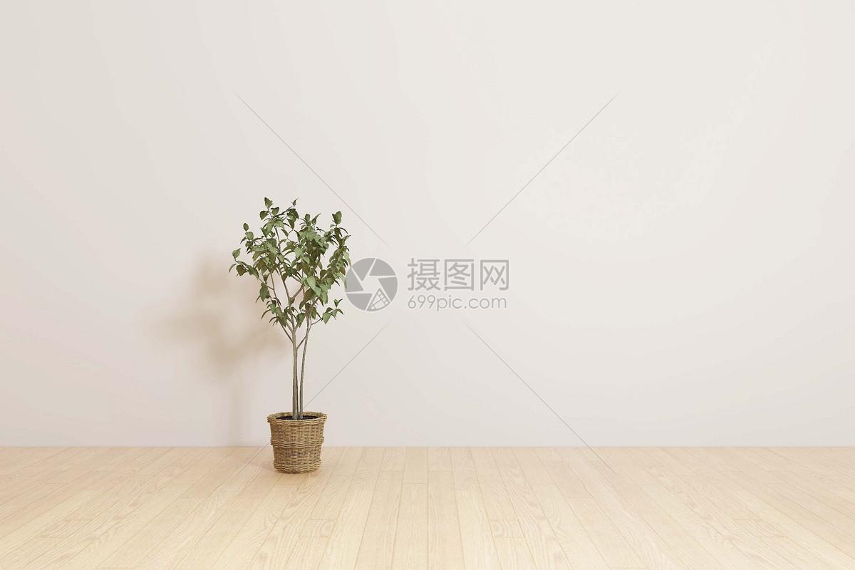 简约盆栽图片