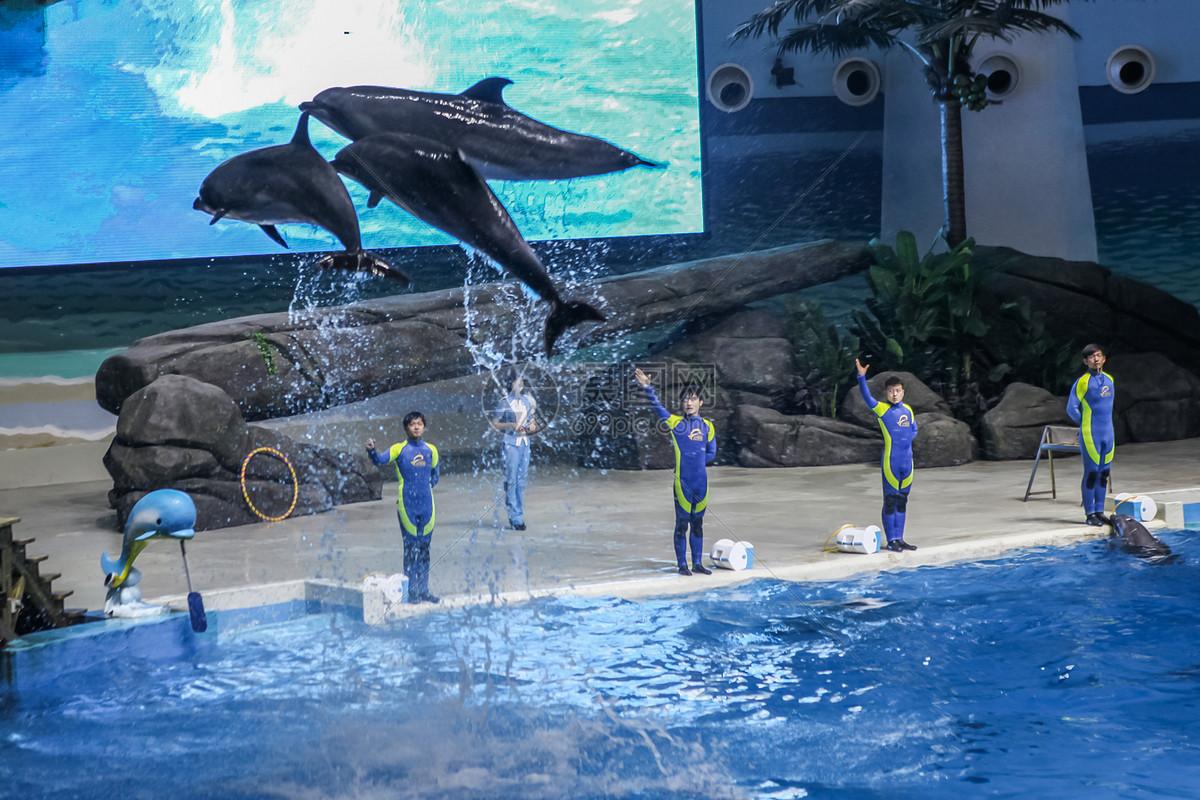 海洋馆的海豚表演图片