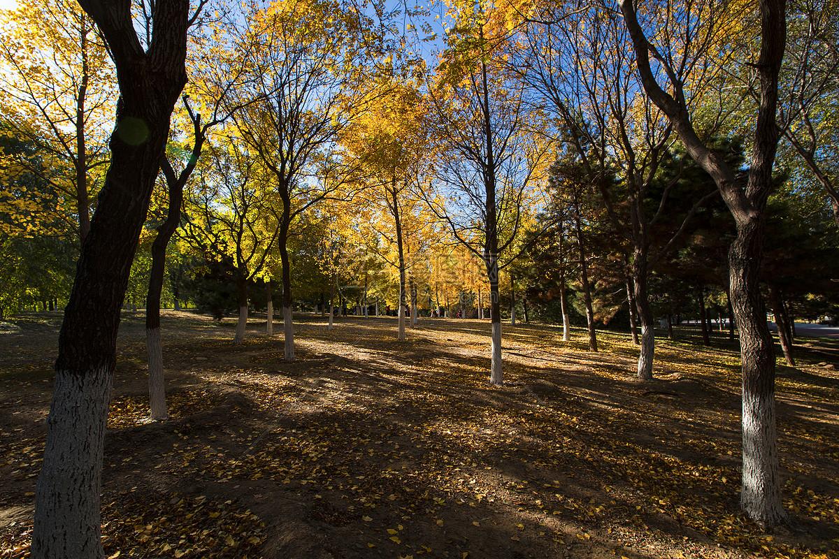 奥林匹克森林公园的秋色图片