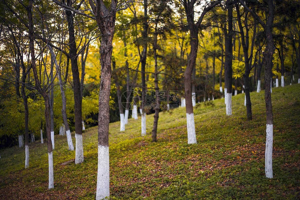 奥林匹克森林公园的秋天树林图片
