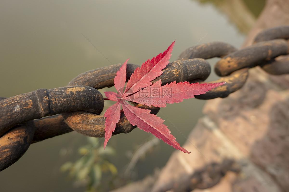 河边铁链上的深红色枫叶图片