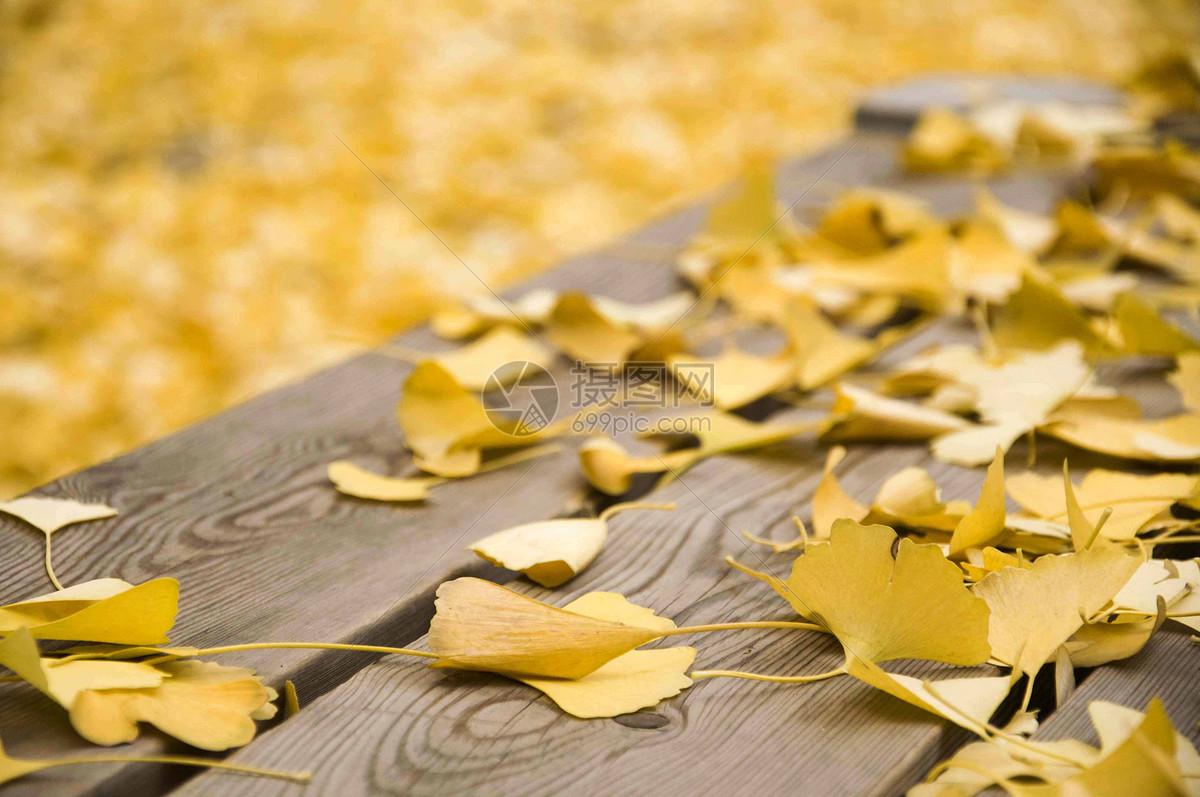 银杏落叶图片