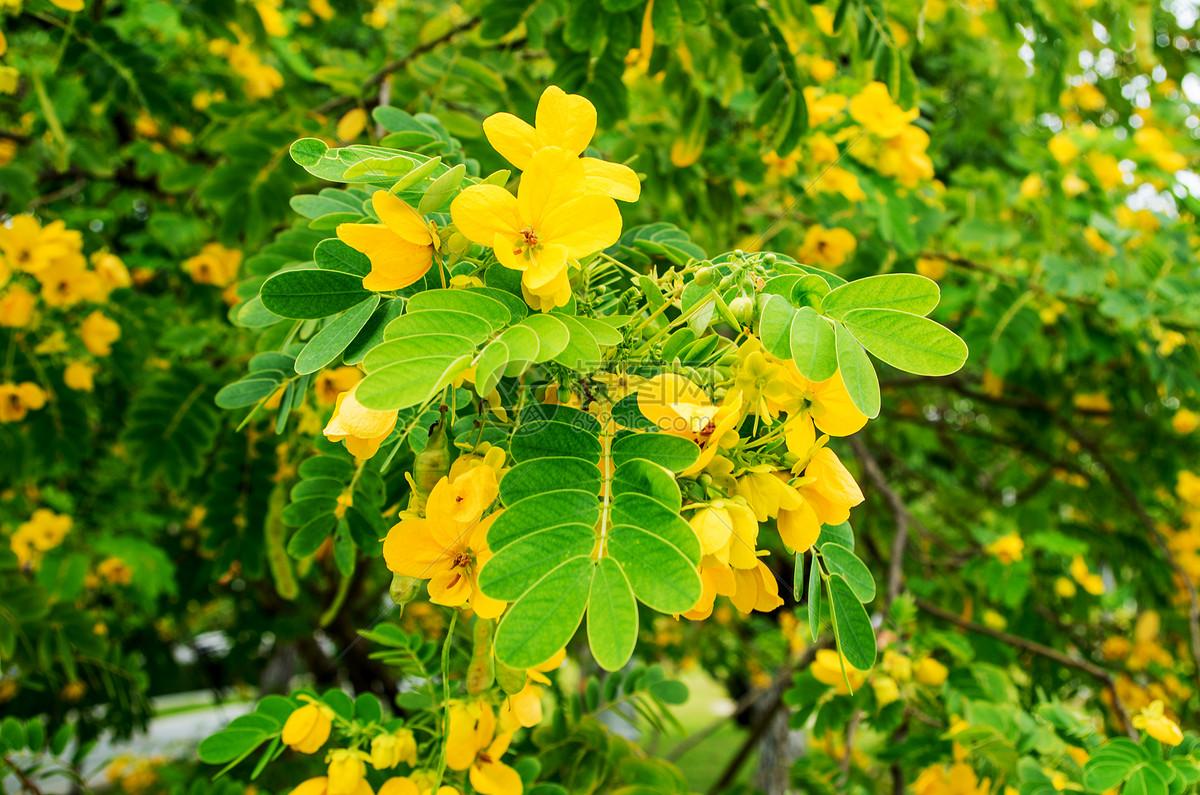 越南芽庄秋天热带植物图片