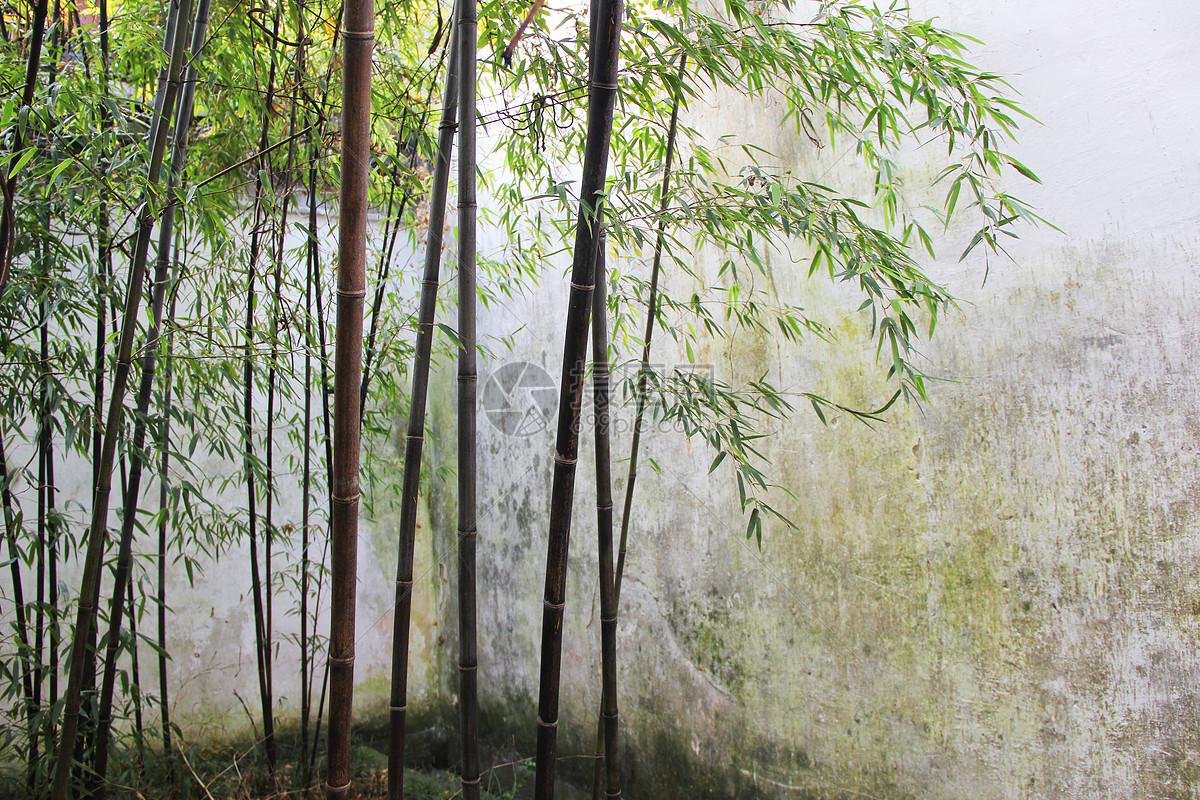 宁波保国寺江南庭院竹林图片