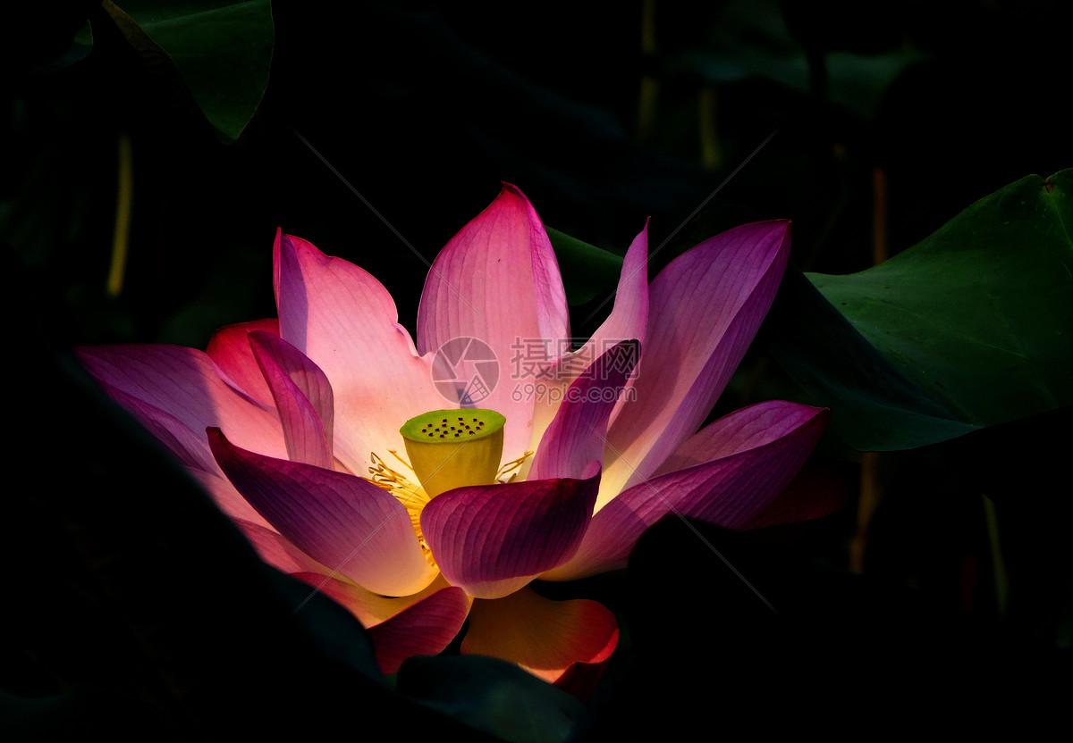 夏日荷塘夜色图片