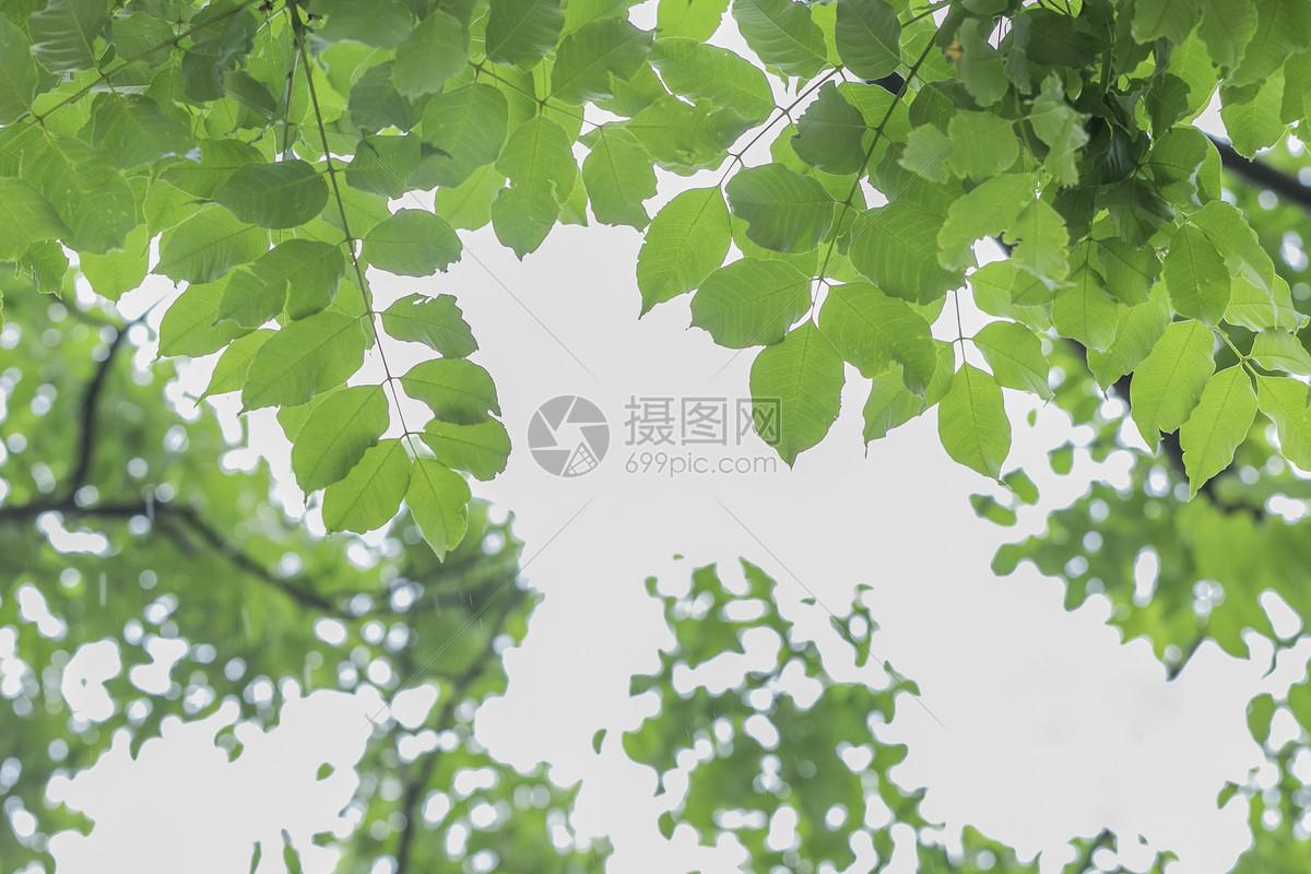 夏至绿植绿叶图片